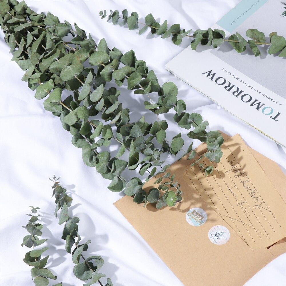 10 pçs natural folhas de eucalipto flores secas fotografia adereços decoração para casa ramos hastes diy casamento ornamento arranjo