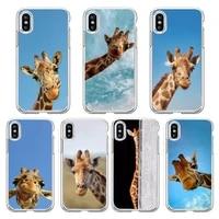lovely animal giraffe phone case transparent soft for iphone 5 5s 5c se 6 6s 7 8 11 12 plus mini x xs xr pro max