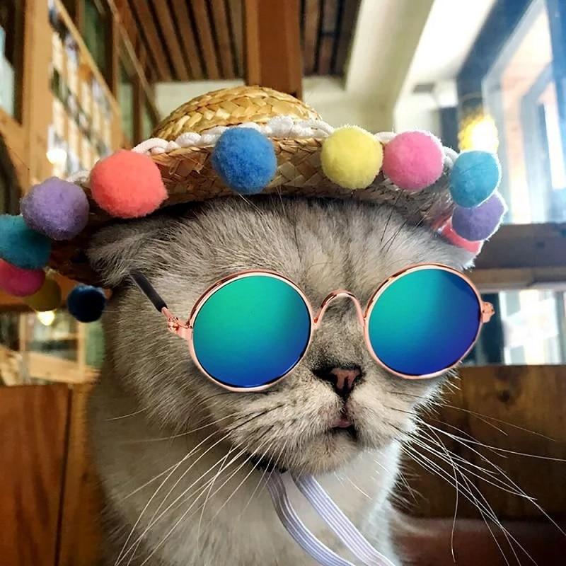 1vnt puikių naminių kačių akinių, šunų akinių, naminių gyvūnėlių gaminių, skirtų mažų šunų kačių akinių nešiojamiems šunų akiniams nuo saulės, nuotraukos naminiams gyvūnėliams