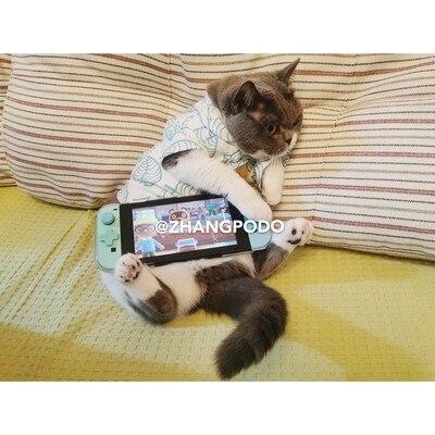 Dibujos de Japón corgi de mapache mascota gato camiseta Animal crossing ropa de verano ropa de cachorro manga corta cabo porque vestido