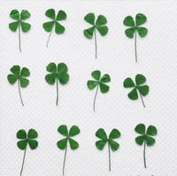 60pcs pressed dried clover four leaf plant herbarium for epoxy resin makeup jewelry postcard invitation card phone case diy