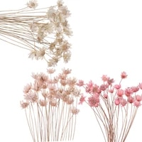 Mini fleurs sechees decoratives  30 pieces  Bouquet de petites fleurs etoilees  plantes naturelles  conservation florale pour decoration de mariage et de maison