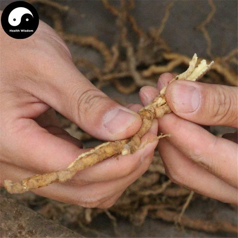 Yuan zhi, radix polygalae, raiz polygala