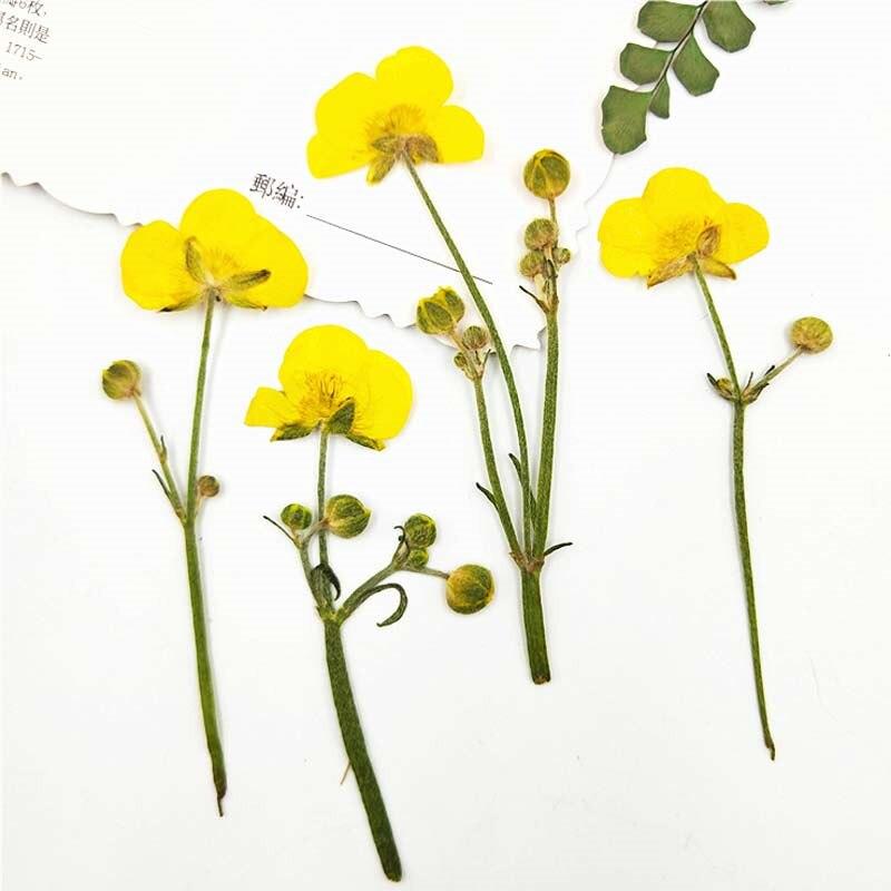 Lo último de 2020, cuentas de mariposa a la moda, flores secas DIY para decoración de tarjetas de regalo, 80 Uds.