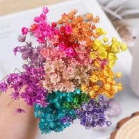 30pcs decorative dried flowers mini daisy small star flowers bouquet natural plants for wedding home decoration photo props