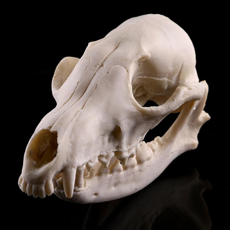 Calavera de Animal, zorro rojo, modelo de calavera de alta simulación, Colección educativa de taxidermia, regalo de decoración, KYY1082 1 unidad