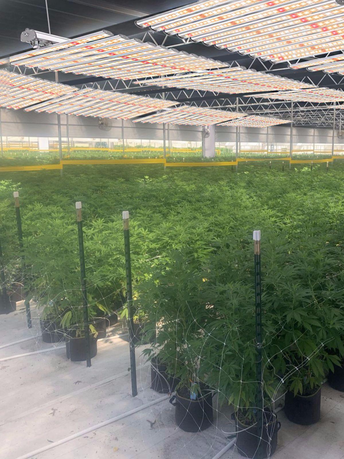 Detachable led grow light for indoor plant bars 720w equipment replacing 1000w hps for vertical farming phytolamp full spectrum enlarge
