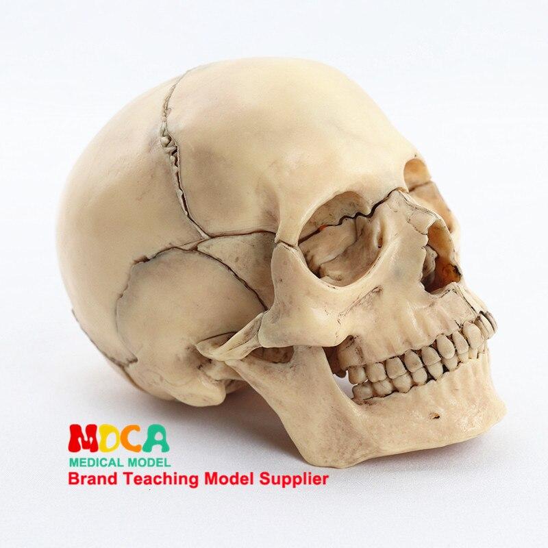 15pcs/Set Resin White Skull Medical Teaching Model Detachable Anatomical Tool 14.6*10.2*8.7cm
