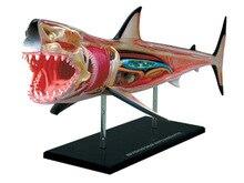 4d tubarão animal anatomia modelo esqueleto médico ajuda de ensino laboratório equipamentos de educação master puzzle montagem brinquedo