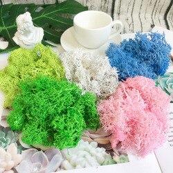 10g planta artificial para parede, vida eterna, musgo, flor, material de decoração de jardim, casa, mini jardim, micro acessórios para paisagem