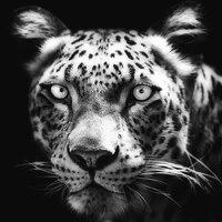GELANYOUPIN     peinture diamant leopard 5D  broderie complete en noir et blanc  point de croix  decoration dinterieur