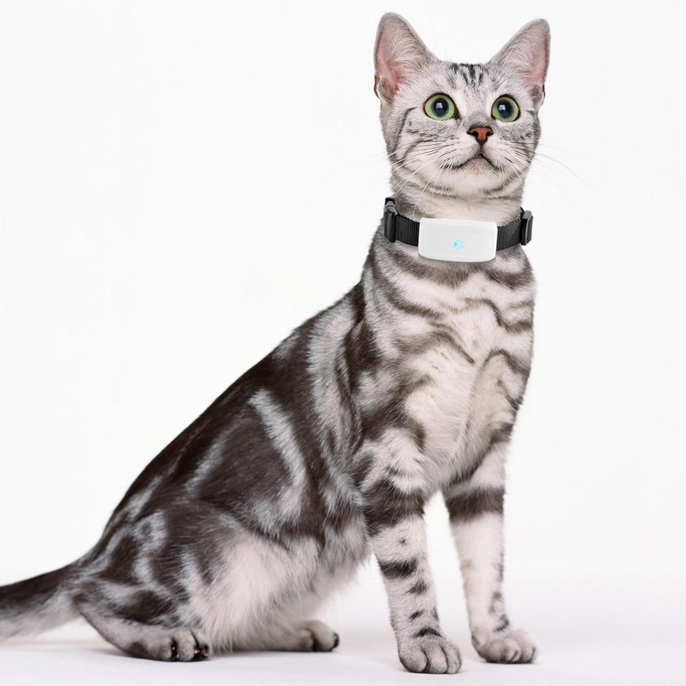 TK911 Mini Wifi Pet Cat Dog GPS Tracker Locator Small Tracking Device Waterproof Real time Google Map Free Web APP Tack enlarge