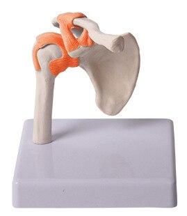 Reduced shoulder model shoulder joint with ligament model