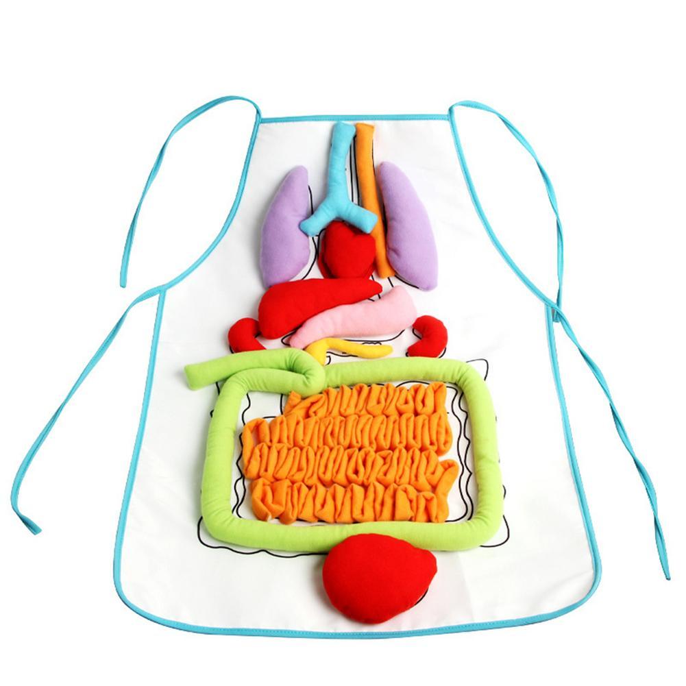 brinquedos educativos criativos para criancas anatomia avental corpo humano orgaos