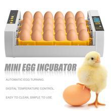 Incubateur à 24 œufs de grande capacité   Mini-incubateur pour poulet, volaille caille dinde œufs pratique pour la maison, tournage automatique des œufs