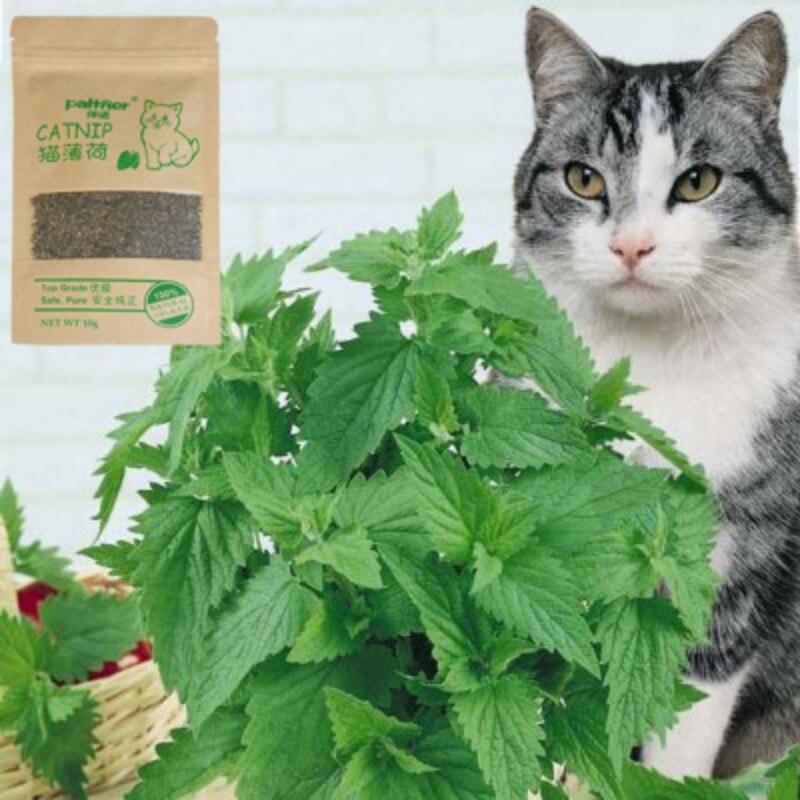 Gatito gato menta suministros hoja Flor de juguete seca orgánica Catnip Nepeta respetuoso del medio ambiente Universal mascota doméstica gato suministros