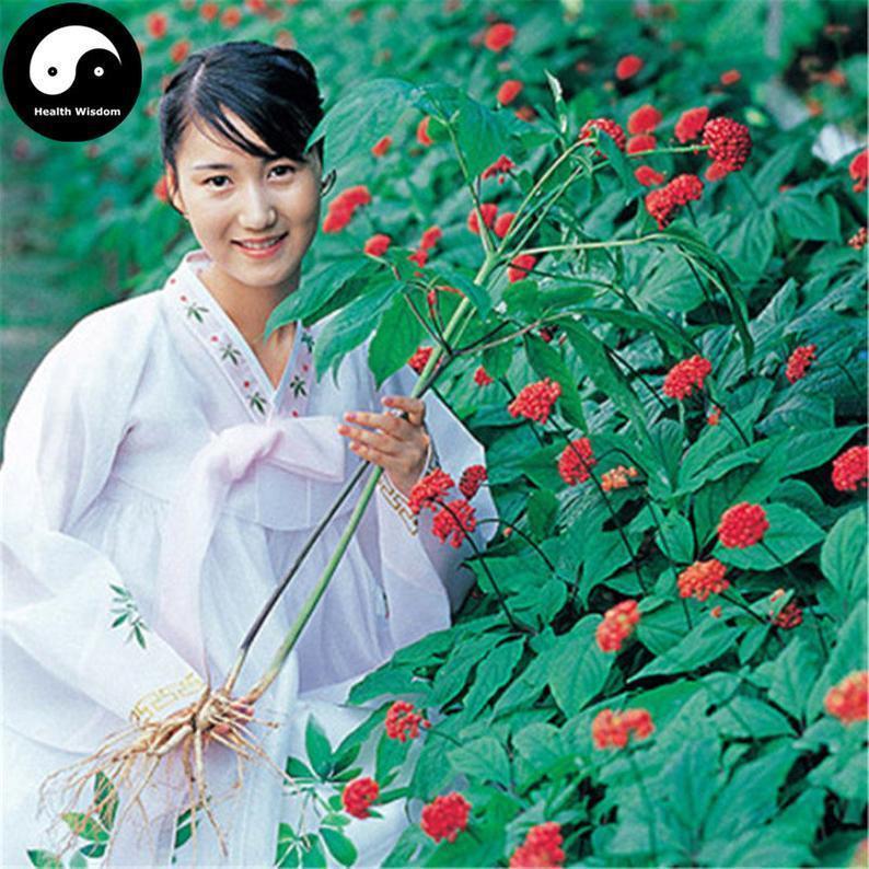 Buy Korean Ginseng Semilla Plant Chinese Tonic Herb Panax Ginseng For Gao Li Shen