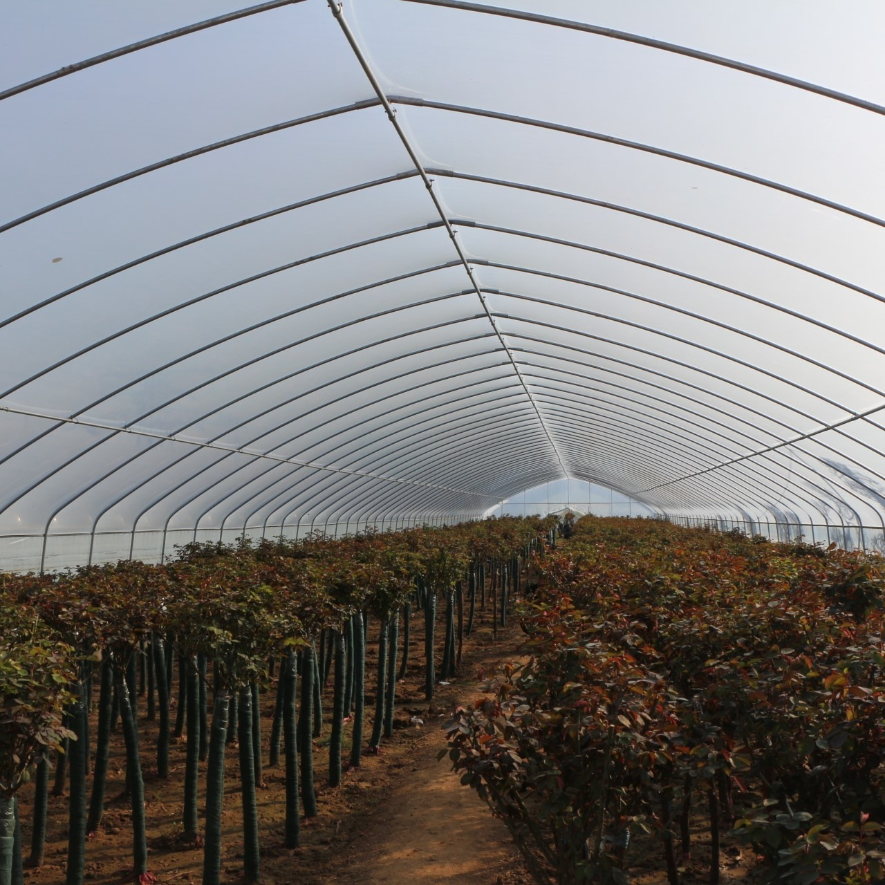 Very strong frame and film for agricultural vegetable greenhouse garden