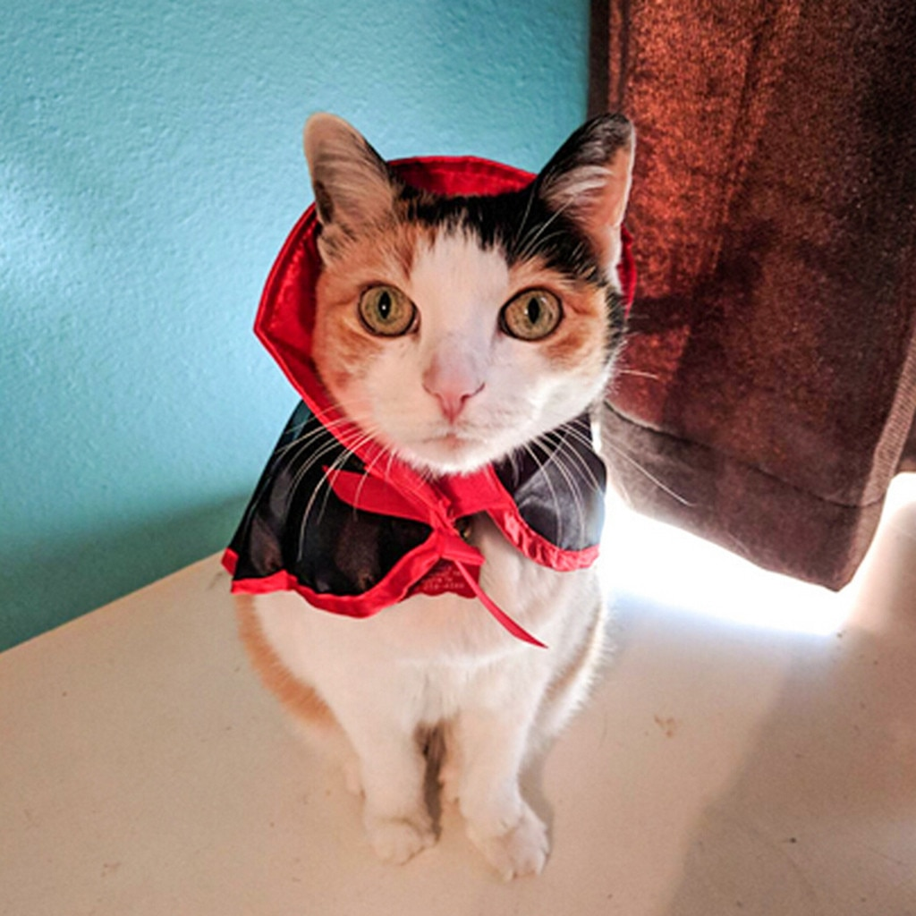 Ropa de perro mascota antigua capa de gato disfraces de Halloween Cosplay capa de bruja ropa linda para trajes de traje de tela de perro pequeño