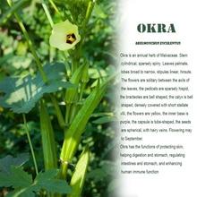 Okra seco listo para comer verduras crujientes okra chips deshidratados 500g verduras deshidratadas snacks secos bolsa a granel