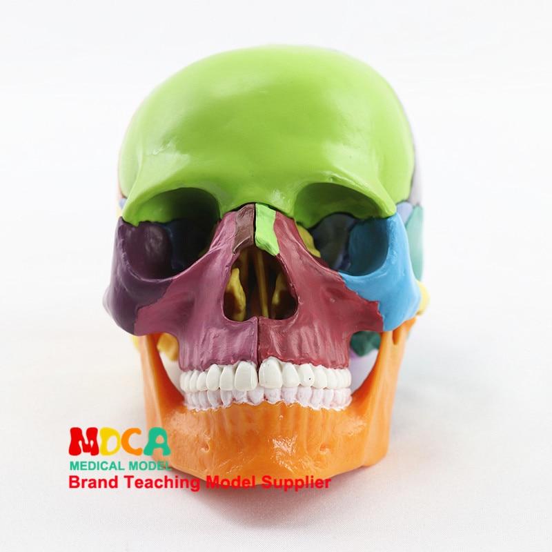 15pcs/Set Resin Multicolor Skull Medical Teaching Model Detachable Anatomical Tool 14.6*10.2*8.7cm