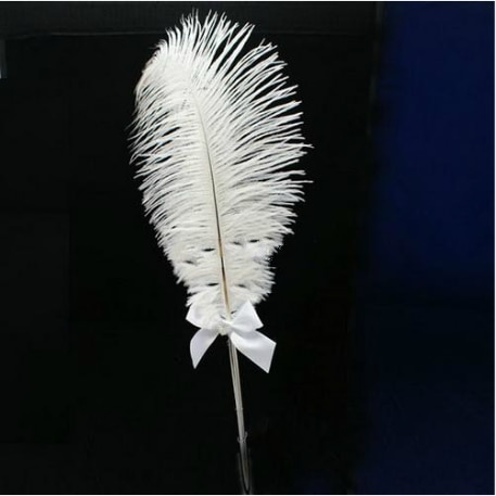 Pluma de avestruz pluma de boda signo en el libro ceremonia de la boda