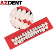 Modèle de dents dentaires 10 ensemble modèle danatomie anatomique de dent de dentiste Permanent adulte modèle de prothèse dentaire de Communication remplacer Teet