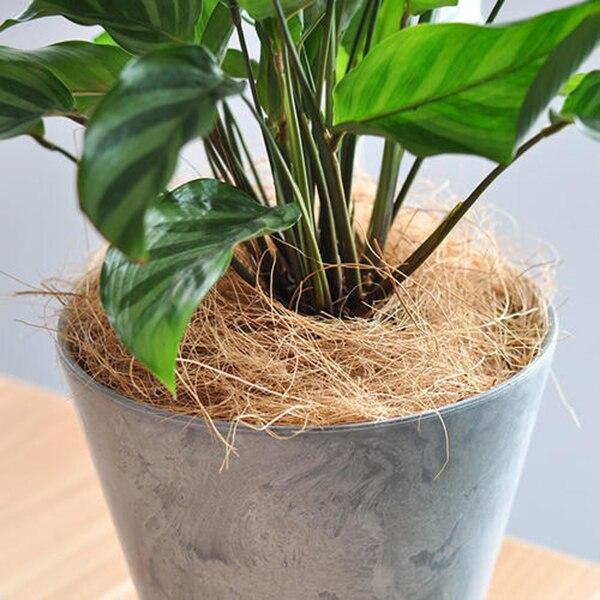 Nuevas orquídeas de fibra de cáscara de coco artesanales ropa de cama para mascotas a prueba de insectos protegen las plantas mantienen la temperatura del suelo
