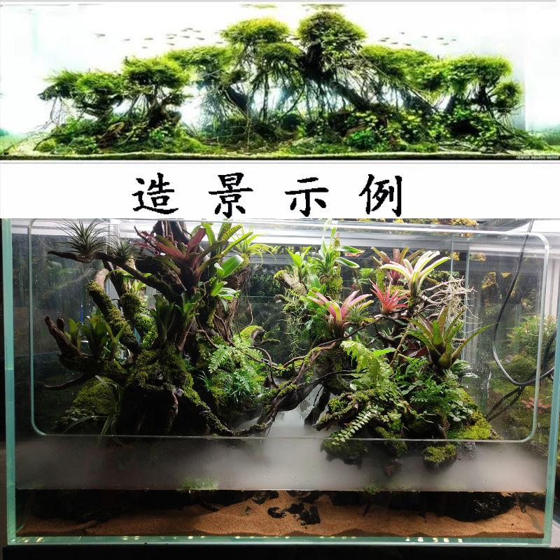 Natural Air Dried Tree Vine Old Mountain Dry Rattan Decor Aquarium Fish Tank Landscaping Decoration DIY Moss Aquatic Plants