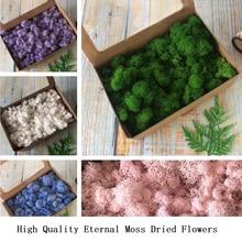 200g High Quality Eternal Moss Artificial Green Plant Dried Flowers DIY Gift Box Handicrafts Accessorie Decor Wall Stickers Moss