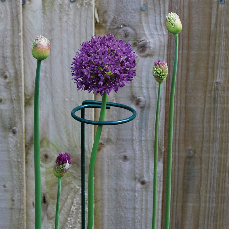 Forma redonda, soporte de tallo de planta, jaula anillo de hierro para jardín, soporte de borde de planta, aro de soporte en maceta, herramienta de soporte de planta de Metal