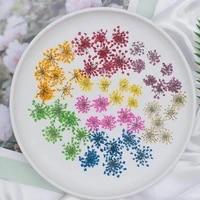 12pcs pressed dried ammi majus flowers plant herbarium for jewelry postcard invitation card phone case bookmark making diy