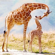 "100% Full 5D Diy Daimond Painting ""Giraffe Family"" 3D Diamond Painting Round Rhinestone Diamant Painting Embroidery Animal"