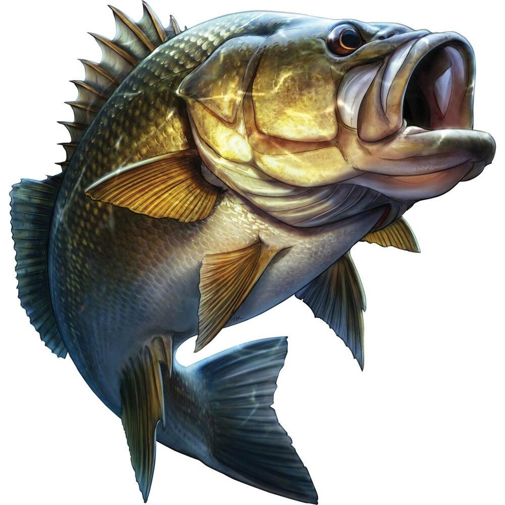 Pegatinas de peces con diseño de dibujos animados para coche, pegatinas de peces, calcomanías de Kayak, Auto camión, portátil, vinilo adhesivo para ventana, 20cm x 20cm