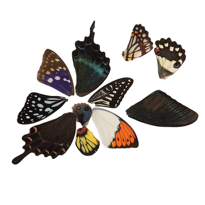 100 Uds alas de mariposa reales regalo aleatorio joyería DIY arte artesanía a mano