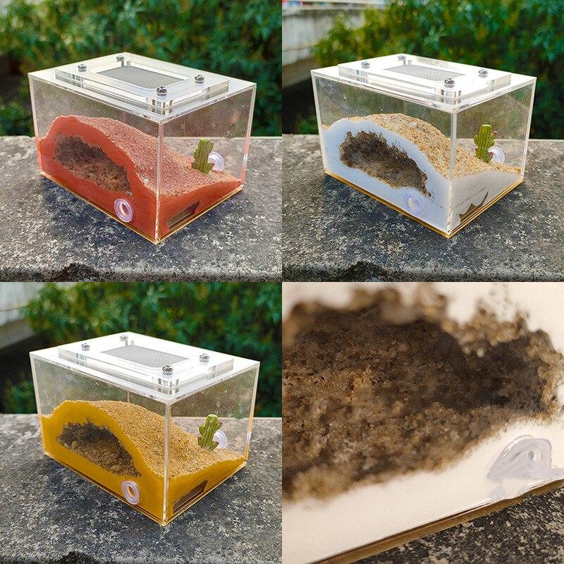 [Las Hormigas traficante profesional] para las hormigas granja de hormigas nido Formicarium para jóvenes en Queens o pequeño cononies messor y Camponotus