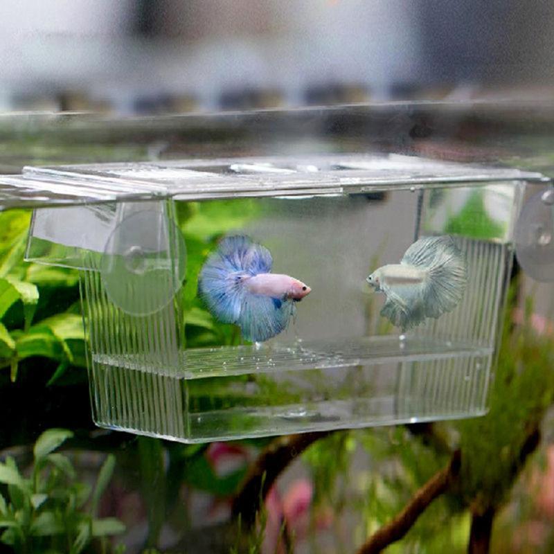 Acuario transparente doble tazón contra pescado Mini casa caja incubadora para aislamiento Fry incubadora jaula para reptil tortuga casa