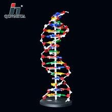 60cm adn Structure modèle Base paire gène génétique adn Double hélice modèles biologie enseignement matériel éducatif fournitures
