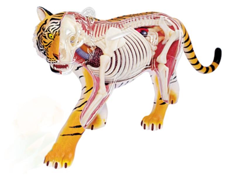 Tigre 4d rompecabezas maestro juguete de ensamblaje Animal biología órgano modelo médico anatómico modelo de enseñanza