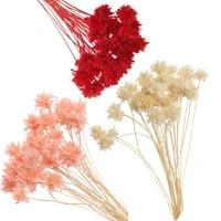 Mini Bouquet de fleurs sechees  1 sachet  petites fleurs  plantes naturelles vives  pour conserver  pour decoration de mariage  de maison