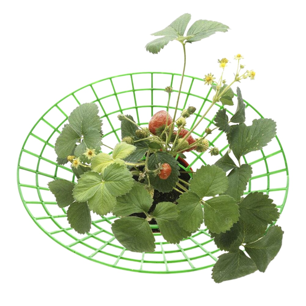 Strawberry Holder Strawberry Plant Stands to Keep Fruit Elevated to Prevent Rot Vegetable Stand for Balcony Garden