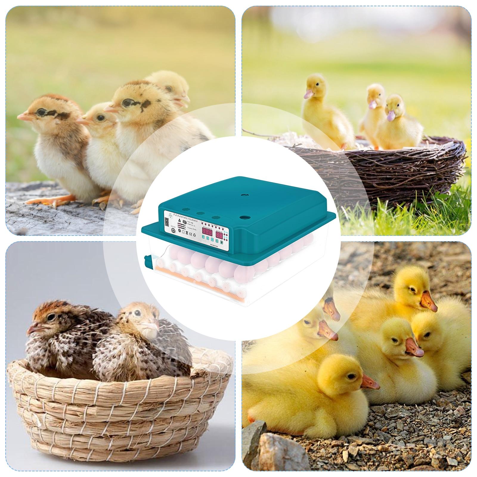 Инкубатор для яиц, полностью автоматический инкубатор, домашний инкубатор для кур на ферме, инкубатор для цыплят инкубатор птичьих яиц 36 яи...