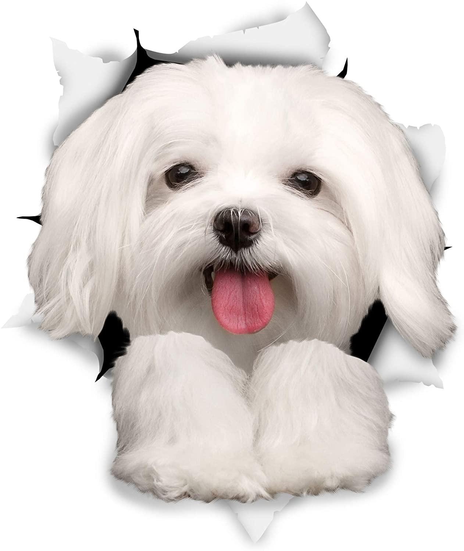 Adhesivo decorativo para coche o perro maltés de Dawasaru, pegatina para arañazos, accesorios de PVC para coche o camión portátil o motocicleta, 12cm x 9cm