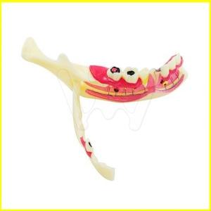 Dental MandibularTeeth Demonstration Anatomical Patient Study Teach Model