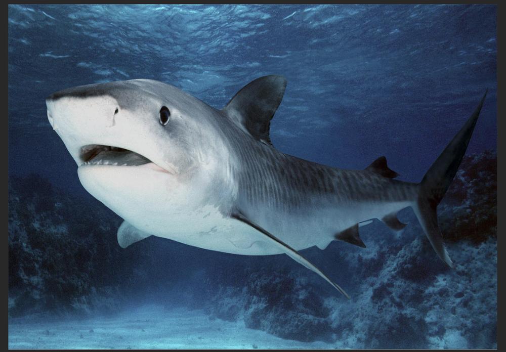 PLACA de Metal de tiburón blanco mar pez azul profundo de decoración...