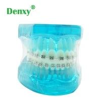 dental study teeth model orthodontic treatment model with metal bracket education teeth model dental brace model