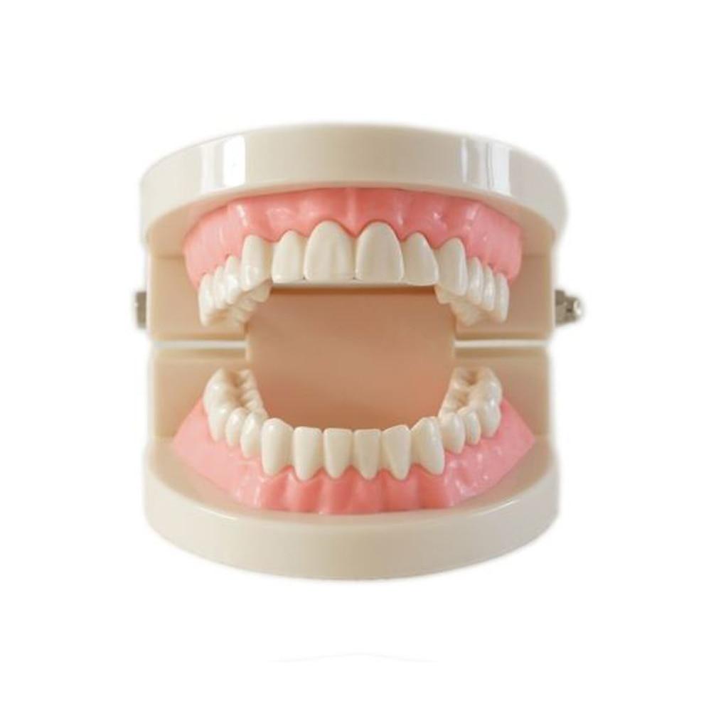 Фото - Dental denture model gums standard audlt teeth model Medical teaching tool Teeth model instructional tool james h stronge instructional planning for effective teaching