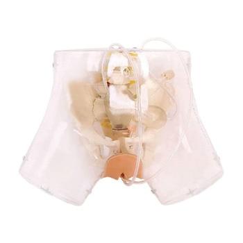 Curettage Training Simulator Transparent Female Urethral Catheterization Curettage Model for Gynecology Medical Training