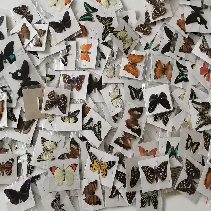 10Pcs Natural Real Unmounted Butterfly Specimen Artwork Material Colorful Mixed Le Papillon Home Decoration DIY