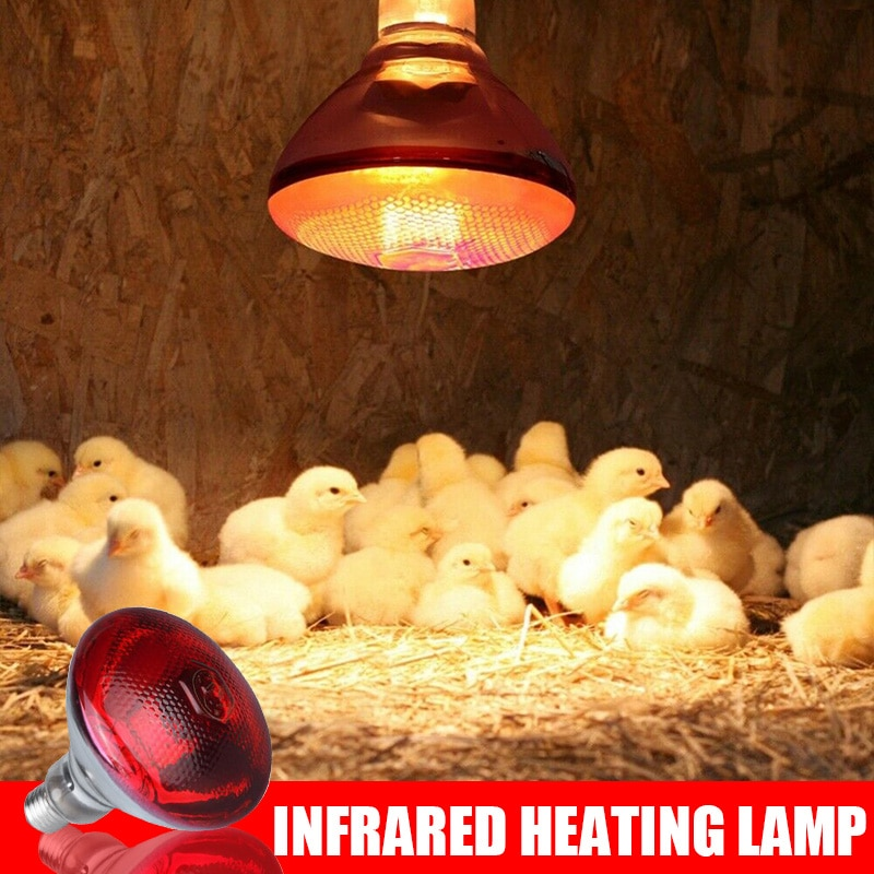 Plus récent 240V infrarouge lampe de chaleur volaille couveuse poussins étanche à couver chiots porcelet ampoule